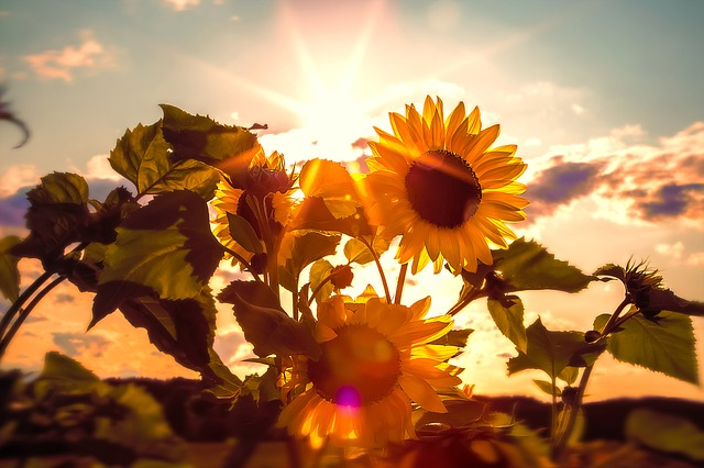 The Sunshine Vitamin What You Need To Know